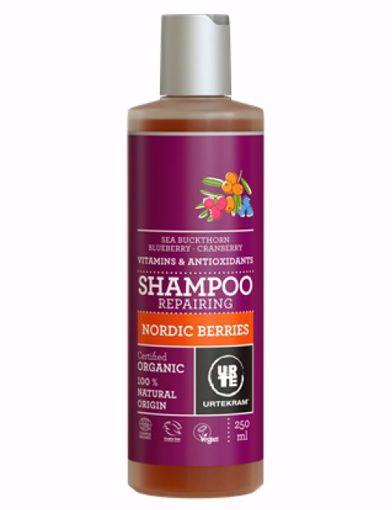 Urtekram šampon Nordic Berries - poškozené vlasy 250ml
